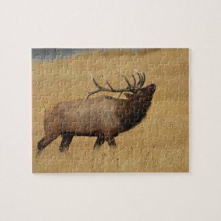bull elk puzzle