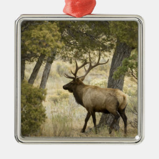 Bull Elk, Yellowstone National Park, Wyoming, Christmas Ornament