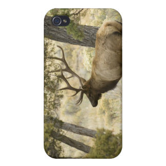 Bull Elk, Yellowstone National Park, Wyoming, iPhone 4 Cover