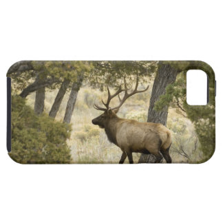 Bull Elk, Yellowstone National Park, Wyoming, iPhone 5 Covers