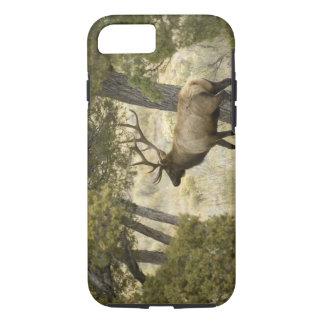 Bull Elk, Yellowstone National Park, Wyoming, iPhone 7 Case