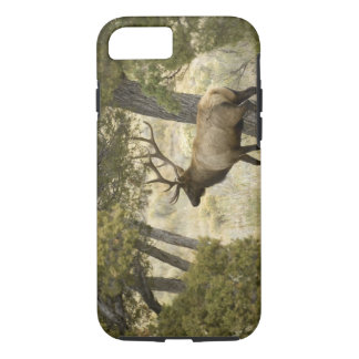 Bull Elk, Yellowstone National Park, Wyoming, iPhone 8/7 Case