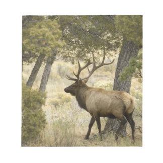 Bull Elk, Yellowstone National Park, Wyoming, Notepad