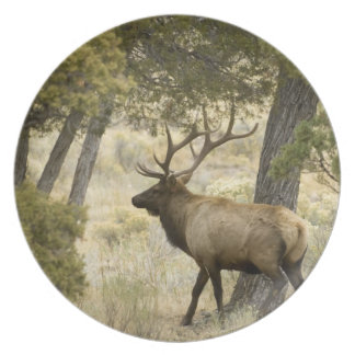 Bull Elk, Yellowstone National Park, Wyoming, Party Plates