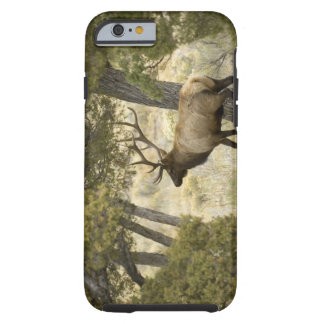 Bull Elk, Yellowstone National Park, Wyoming, Tough iPhone 6 Case
