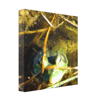 Bull Frog Wrapped Canvas