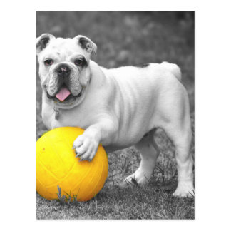Bull in black and white with yellow ball postcard