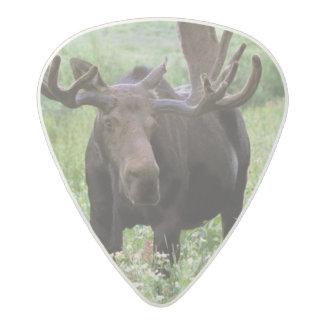 Bull moose Alces alces) in wildflowers, Acetal Guitar Pick