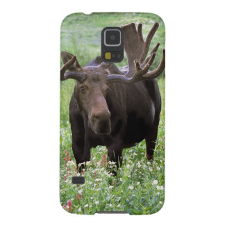 Bull moose Alces alces) in wildflowers, Galaxy S5 Case