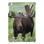 Bull moose Alces alces) in wildflowers, iPad Mini Cover
