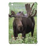 Bull moose Alces alces) in wildflowers, iPad Mini Cases
