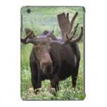 Bull moose Alces alces) in wildflowers, iPad Mini Retina Covers