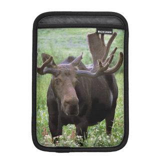Bull moose Alces alces) in wildflowers, iPad Mini Sleeve