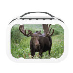 Bull moose Alces alces) in wildflowers, Yubo Lunchbox