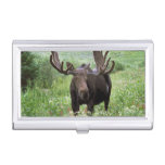 Bull moose Alces alces) in wildflowers, Business Card Case