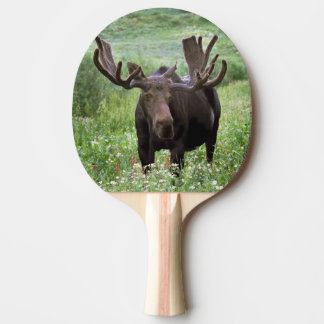 Bull moose Alces alces) in wildflowers, Ping Pong Paddle