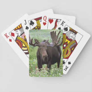 Bull moose Alces alces) in wildflowers, Poker Deck