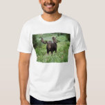 Bull moose Alces alces) in wildflowers, Shirts