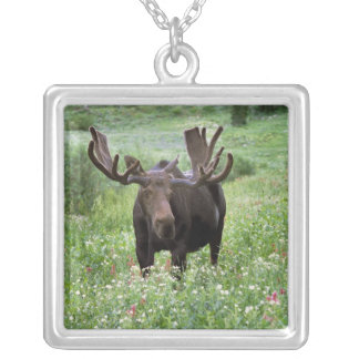 Bull moose Alces alces) in wildflowers, Silver Plated Necklace