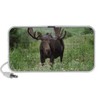 Bull moose Alces alces) in wildflowers, Mp3 Speakers