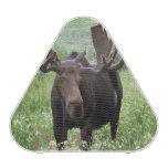 Bull moose Alces alces) in wildflowers, Speaker