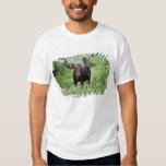 Bull moose Alces alces) in wildflowers, Tees