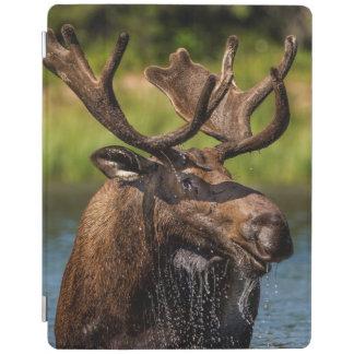 Bull moose feeding in Glacier National Park iPad Cover