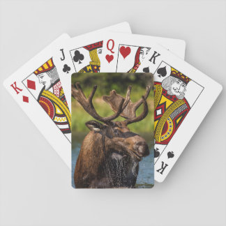 Bull moose feeding in Glacier National Park Playing Cards