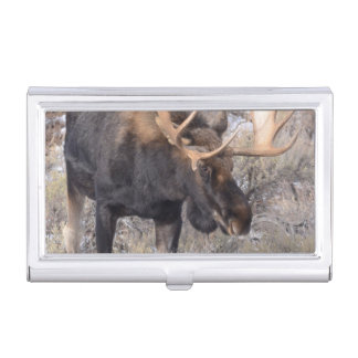 Bull Moose in field with Cottonwood Trees Business Card Holder