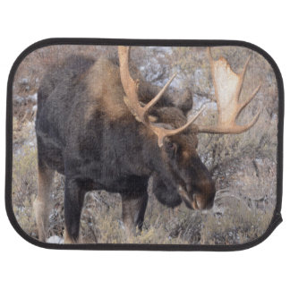 Bull Moose in field with Cottonwood Trees Car Mat