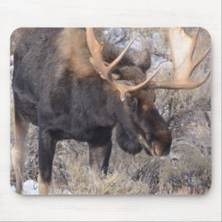 Bull Moose in field with Cottonwood Trees Mouse Mat