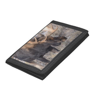 Bull Moose in field with Cottonwood Trees Trifold Wallets
