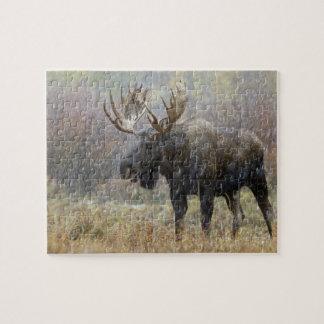 Bull moose in snowstorm with aspen trees in jigsaw puzzle