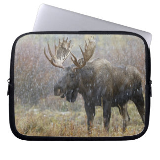 Bull moose in snowstorm with aspen trees in laptop sleeve