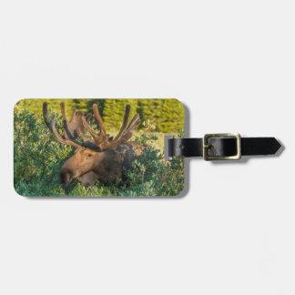 Bull moose in velvet, Colorado Luggage Tag