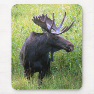 Bull Moose Mouse Mat