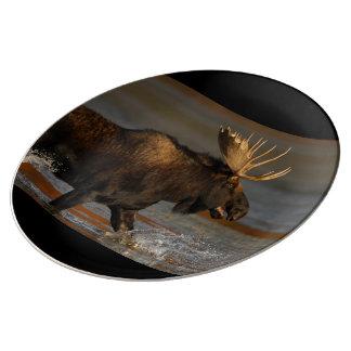 Bull Moose Plate