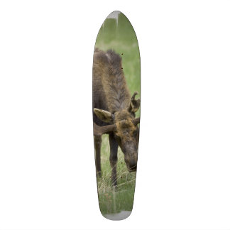 Bull Moose Skate Board Decks