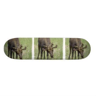 Bull Moose Skateboard