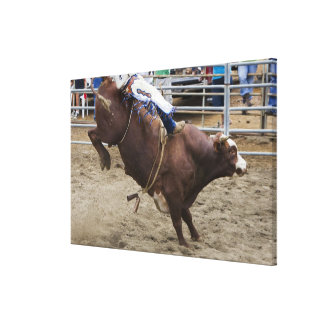 Bull rider at rodeo canvas print