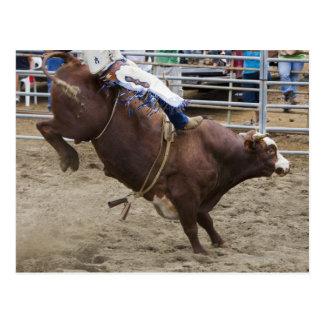 Bull rider at rodeo postcard