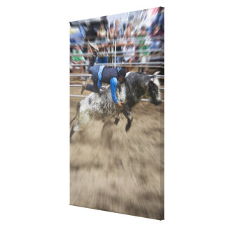 Bull rider thrown off bull canvas print