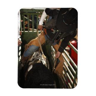 Bull rider tying rope on bull in the chute rectangular magnets