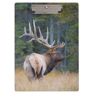 Bull Rocky Mountain Elk Clipboard