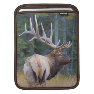Bull Rocky Mountain Elk iPad Sleeve
