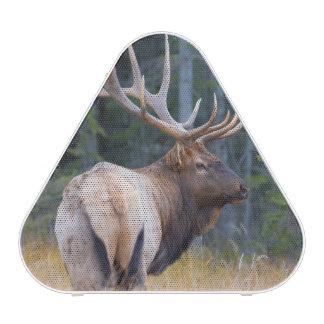 Bull Rocky Mountain Elk
