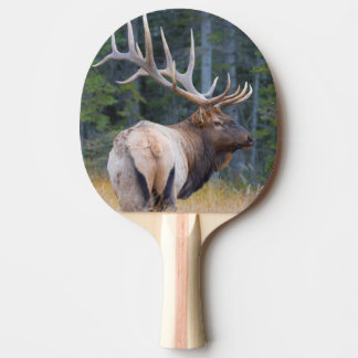 Bull Rocky Mountain Elk Ping Pong Paddle