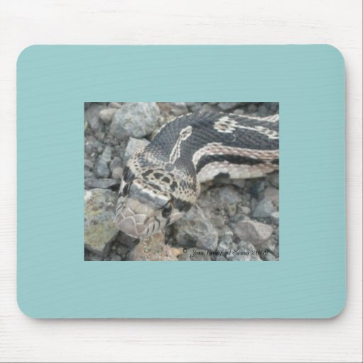 Bull snake (Pituophis catenifer sayi) Mouse Pad