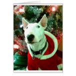 bull terrier christmas greeting cards