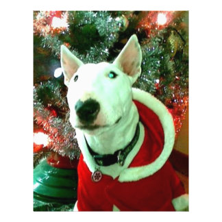 bull terrier christmas personalized flyer